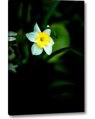 "Winston Porter 'Daffodil I' Photographic Print on Wrapped Canvas BF155729 Size: 32"" H x 21"" W x 1.5"" D"