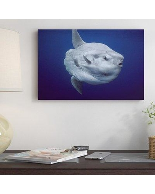 """East Urban Home Portugal 'Ocean Sunfish Portrait' Photographic Print on Wrapped Canvas NNAI5990 Size: 24"""" H x 36"""" W"""