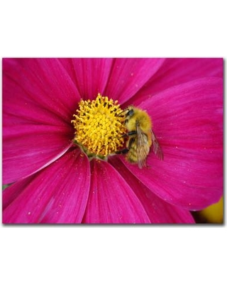 "Trademark Fine Art ""Cosmos Bee "" by Kurt Shaffer Photographic Print on Canvas KS17-C2432GG Size: 24"" H x 32"" W x 2"" D"