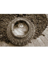 """East Urban Home 'Cat In A Basket' Photographic Print on Wrapped Canvas ERNI2917 Size: 12"""" H x 18"""" W x 1.5"""" D"""