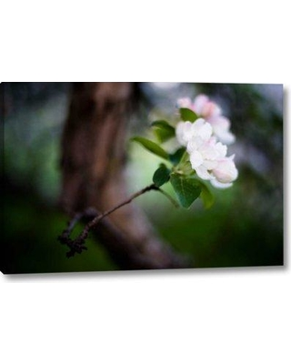 """Winston Porter 'Crabapple Blossoms II' Graphic Art Print on Wrapped Canvas BI155706 Size: 11"""" H x 16"""" W x 1.5"""" D"""
