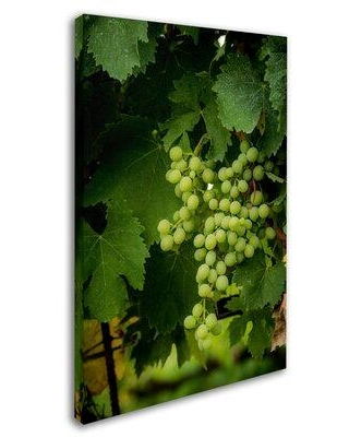 """Trademark Fine Art 'Grapes' Photographic Print on Wrapped Canvas ALI8052-C Size: 19"""" H x 12"""" W x 2"""" D"""