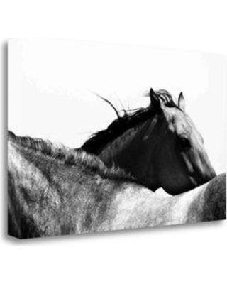 """Tangletown Fine Art 'Wild Whispers II' Photographic Print on Wrapped Canvas CACPP501C-2314c Size: 17"""" H x 28"""" W"""