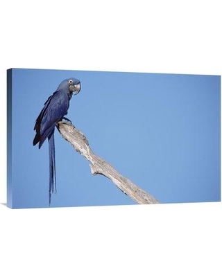 """East Urban Home 'Hyacinth Macaw in Tree Pantanal Brazil' Photographic Print EAUB5513 Size: 20"""" H x 30"""" W Format: Wrapped Canvas"""