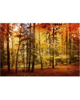 'Brilliant Fall Color' by Philippe Sainte-Laudy Ready to Hang Canvas Wall Art, Multi-Colored