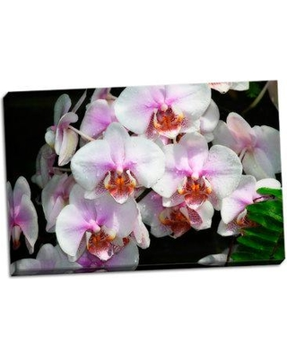 Bay Isle Home 'Moth Orchids I' Photographic Print on Wrapped Canvas BF053290