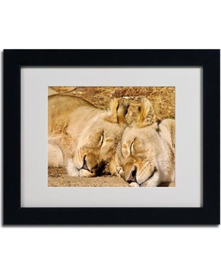 """Trademark Art """"National Zoo - Lions"""" by CATeyes Framed Photographic Print MZ0238- Size: 11"""" H x 14"""" W x 0.5"""" D Frame: Black"""