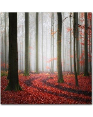 """Trademark Art 'Autumnal Tracks' Photographic Print on Wrapped Canvas 1X00482-C Size: 24"""" H x 24"""" W"""