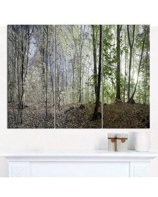 Design Art 'Green Morning in Forest Panorama' Photographic Print Multi-Piece Image on Canvas PT15463-3P