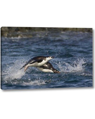 """Breakwater Bay 'Antarctica Adelie Penguins Porpoising' Photographic Print on Wrapped Canvas BI153289 Size: 16"""" H x 24"""" W x 1.5"""" D"""