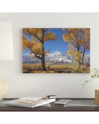 """'Cottonwood Trees, Fall Foliage, Carson Valley, Nevada II' Graphic Art Print on Canvas East Urban Home Size: 12"""" H x 18"""" W x 0.75"""" D"""
