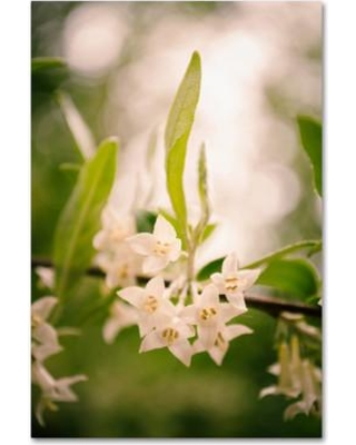 """Trademark Fine Art Floral Tranquility Photographic Print on Wrapped Canvas MFG0021-C Size: 32"""" H x 22"""" W x 2"""" D"""