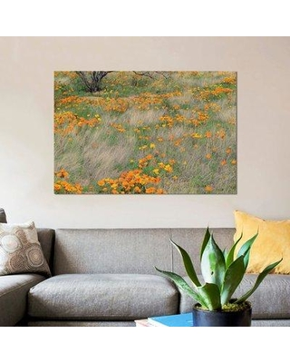 """East Urban Home 'California Poppy Meadow with Grasses California' Graphic Art Print on Canvas ESBH7952 Size: 18"""" H x 26"""" W x 0.75"""" D"""