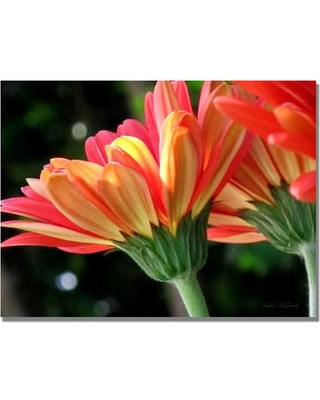 Trademark Art 'Gerber Daisy' by Kathie McCurdy Photographic Print on Canvas KM0200-C Size: 35'' H x 47'' W x 2'' D