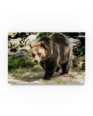 """Trademark Fine Art 'Bear Walking' Photographic Print on Wrapped Canvas, Canvas & Fabric in Brown/Gray, Size 12"""" H x 19"""" W x 2"""" D 