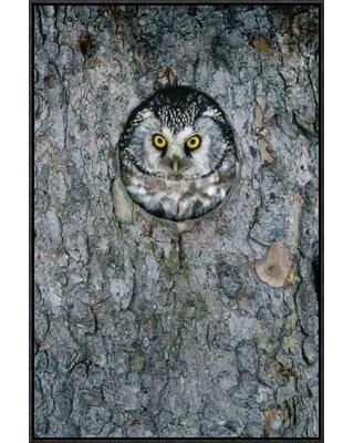 "Global Gallery 'Tengmalm's Owl or Boreal Owl Peaking Through Hole in Tree Sweden' Photographic Print GCF-398510 Format: Black Framed Size: 30"" H x 20"" W"