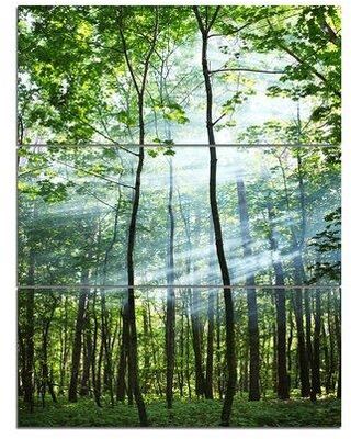 Design Art Green Sunny Forest - 3 Piece Graphic Art on Wrapped Canvas Set PT8739-3PV