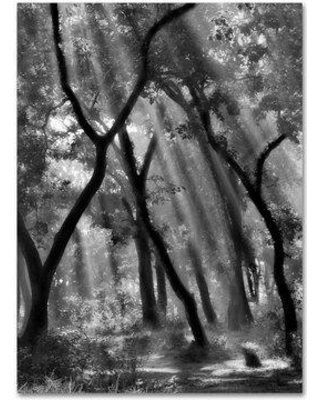 """Trademark Art 'Enchanted Forest' Photographic Print on Wrapped Canvas 1X04096-C Size: 24"""" H x 18"""" W"""