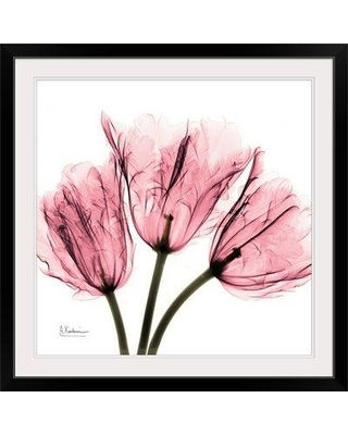 """Great Big Canvas 'Tulips Laugh II X-Ray by Albert Koetsier Photographic Print 1937171_1 Size: 32"""" H x 32"""" W x 1"""" D Format: Black Framed"""