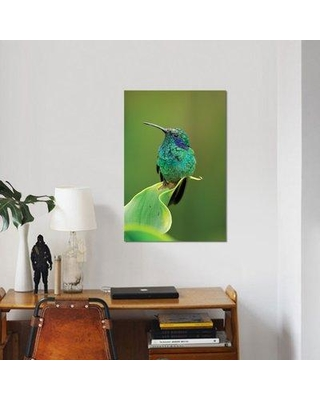 "East Urban Home 'Green Violet-Ear Hummingbird Perched on Leaf Costa Rica' Graphic Art Print on Canvas ESBH6466 Size: 26"" H x 18"" W x 1.5"" D"