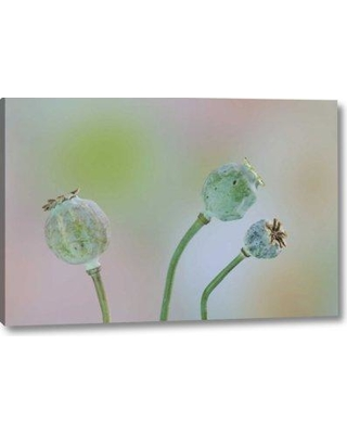 """Winston Porter 'Washington Colorful Poppy Seed Heads on Stems' Photographic Print on Wrapped Canvas BI153138 Size: 10"""" H x 16"""" W x 1.5"""" D"""
