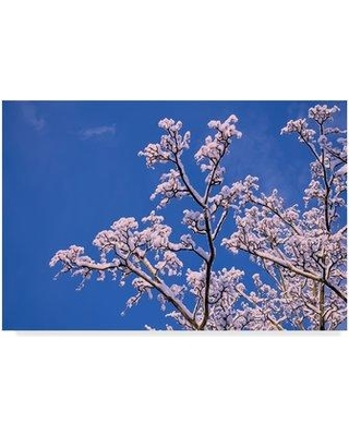 "Winston Porter 'Snowy Tree Branches' Photographic Print on Wrapped Canvas WNPO1736 Size: 22"" H x 32"" W x 2"" D"