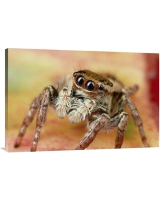 """East Urban Home 'Jumping Spider Portrait Reunion' Photographic Print EAAC8749 Size: 24"""" H x 36"""" W Format: Wrapped Canvas"""