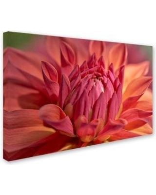 """House of Hampton 'Red Dahlia' Graphic Art Print on Wrapped Canvas HOHP9989 Size: 16"""" H x 24"""" W"""