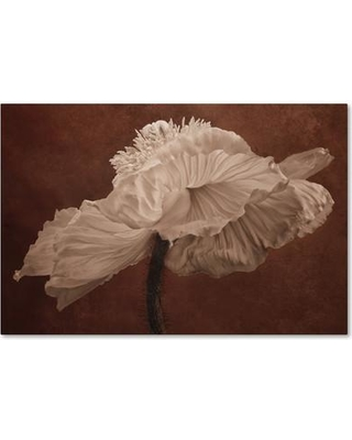 "House of Hampton 'White Poppy' Photographic Print on Wrapped Canvas HOHP9868 Size: 16"" H x 24"" W x 2"" D"