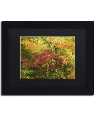 """Alcott Hill 'Colorful Maples' Rectangle Framed Photographic Print ACOT7132 Size: 11"""" H x 14"""" W x 0.5"""" D"""