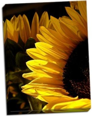 August Grove 'Sunlit Sunflowers I' Photographic Print on Wrapped Canvas BF045631