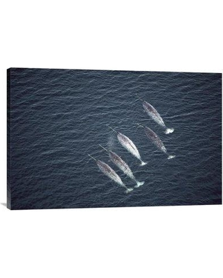 """East Urban Home 'Narwhals Near Water Surface Aerial View Baffin Island Canada' Photographic Print EAAC8143 Format: Wrapped Canvas Size: 20"""" H x 30"""" W"""