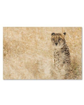 "Trademark Fine Art 'Cheetahs' Photographic Print on Wrapped Canvas ALI19303-C Size: 12"" H x 19"" W"