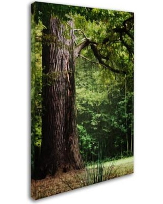 """Trademark Art 'The old Trunk' by Philippe Sainte-Laudy Photographic Print on Wrapped Canvas PSL0454-C Size: 47"""" H x 30"""" W x 2"""" D"""