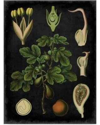 """Charlton Home 'Study in Botany IV' Graphic Art Print on Wrapped Canvas CRLM1953 Size: 19"""" H x 14"""" W x 2"""" D"""