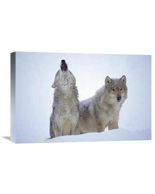 "East Urban Home 'Timber Wolves Close-up Portrait of Pair Howling in Snow North America' Photographic Print on Wrapped Canvas GCS-396793- Size: 16"" H x 24"" W x 1.5"" D"