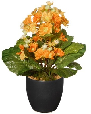 """National Tree Company 12"""" Potted Primula Plant"""