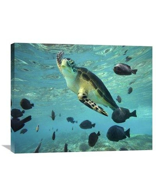 """East Urban Home 'Sea Turtle Balicasag Island Philippines' Photographic Print on Canvas GCS-396255- Size: 24"""" H x 32"""" W x 1.5"""" D"""