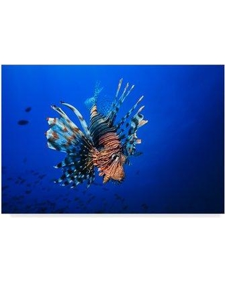 """Trademark Art 'Lionfish' Photographic Print on Wrapped Canvas 1X05853-C Size: 22"""" H x 32"""" W x 2"""" D"""