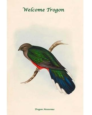 New Bargains On Buyenlarge Trogon Neoxenus Welcome Trogon By John Gould Graphic Art Print 0 587 31852 X Size 36 H X 24 W X 1 5 D