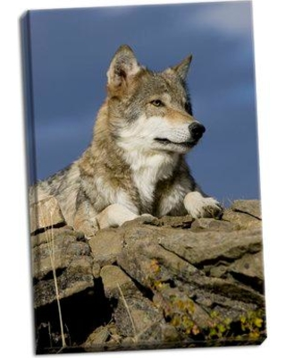 Millwood Pines 'The Wolf King' Photographic Print on Wrapped Canvas BI052214