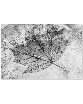 """Trademark Art 'Encased in Ice' by Jason Shaffer Photographic Print on Wrapped Canvas JS0043-C Size: 22"""" H x 32"""" W x 2"""" D"""