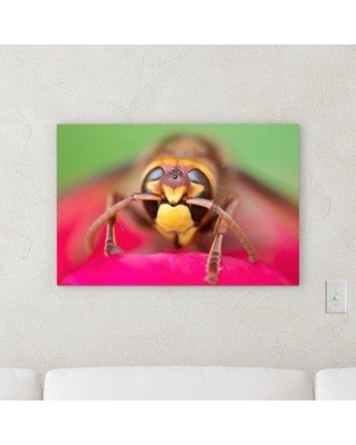 """Winston Porter 'The Little Animals (53)' Photographic Print on Canvas BF120535 Size: 10"""" H x 20"""" W x 2"""" D"""