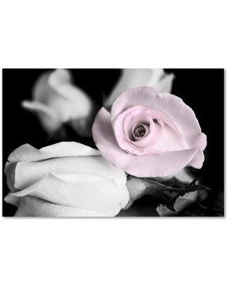 """Trademark Art 'Attache Roses BW' Graphic Art Print on Wrapped Canvas ALI16314-C Size: 16"""" H x 24"""" W"""