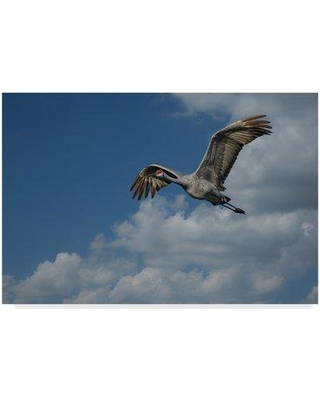 "Trademark Art 'Sandhill Crane in Flight' Photographic Print on Wrapped Canvas ALI34998-CGG Size: 30"" H x 47"" W x 2"" D"