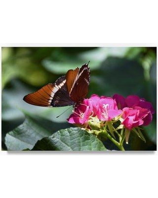 """Trademark Fine Art 'Butterfly' Photographic Print on Wrapped Canvas ALI23388-C Size: 12"""" H x 19"""" W x 2"""" D"""