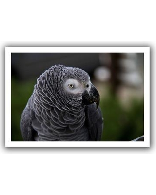 """ArtWall Parrot' by Lindsey Janich Photographic Print on Rolled Canvas 0jan039-12x18 Size: 36"""" H x 52"""" W"""