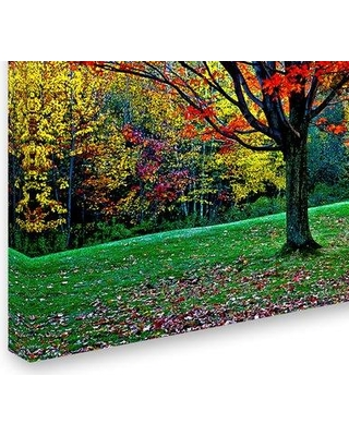 "Trademark Fine Art 'Trees' Photographic Print on Wrapped Canvas ALI12108-C Size: 30"" H x 47"" W x 2"" D"