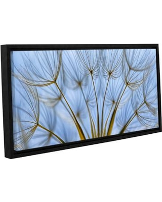 """Latitude Run Parachute Seed Panoramic Framed Photographic Print on Wrapped Canvas LATR5985 Size: 6"""" H 12"""" W"""