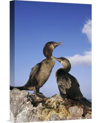 """East Urban Home 'Flightless Cormorant Pair on Seaweed Nest Galapagos Islands Ecuador' Photographic Print EAAC8752 Size: 18"""" H x 12"""" W Format: Wrapped Canvas"""